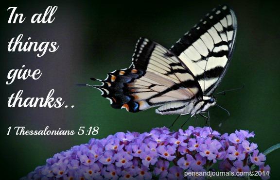 butterfly verse x