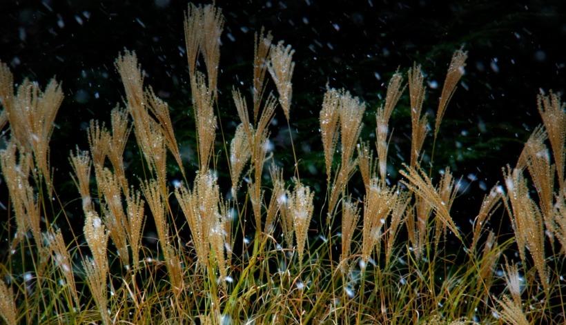 grasses 2 - Copy