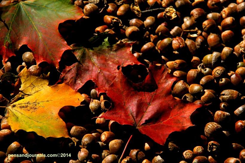 leaves and acorns
