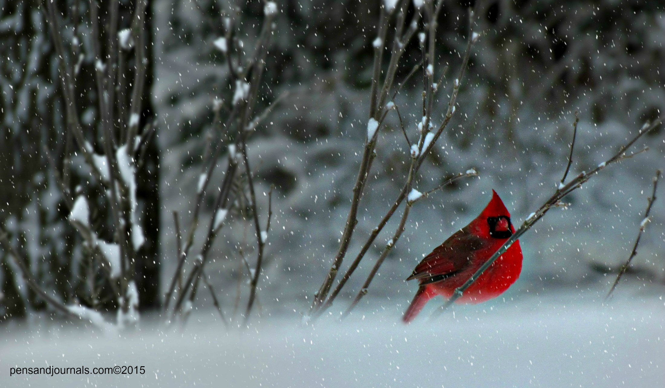 cardinal snow x flksxx - Copywdp