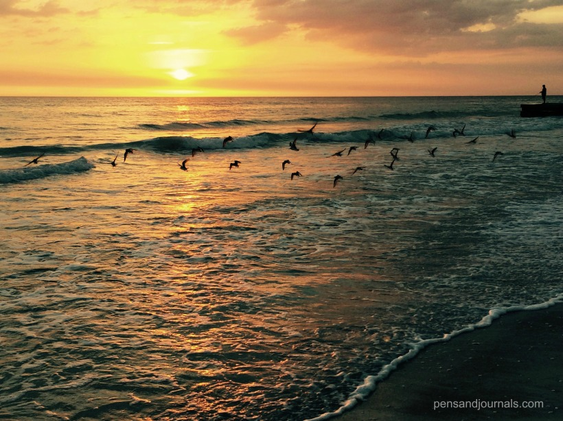 birds sunset wdp
