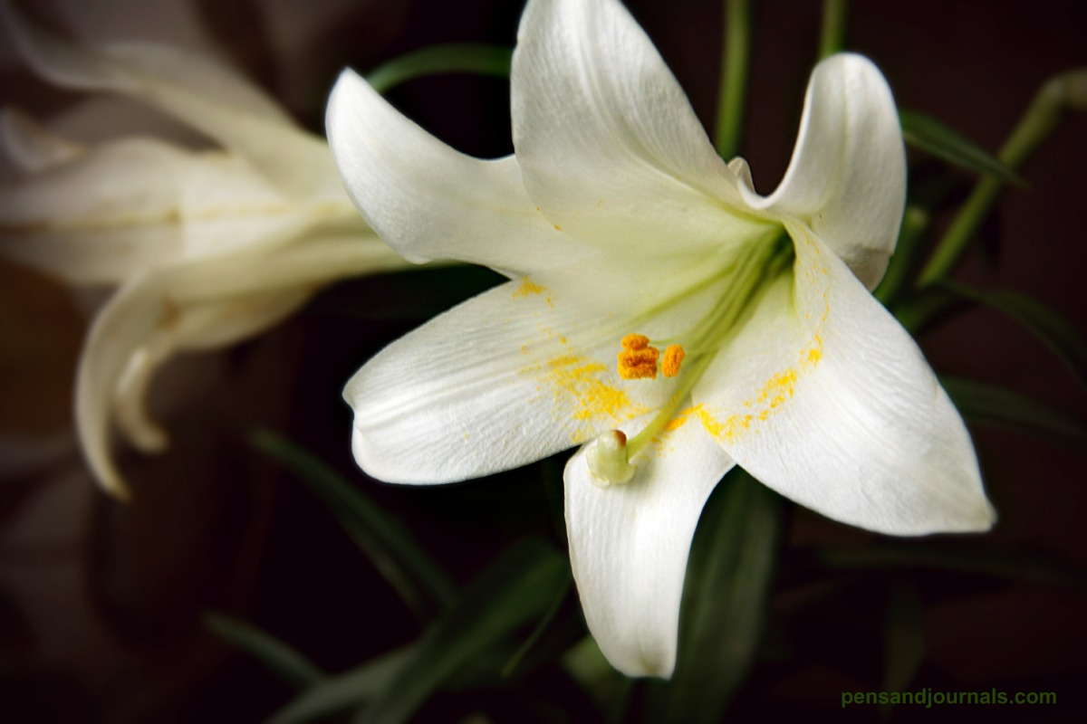 lily 7 x - Copy