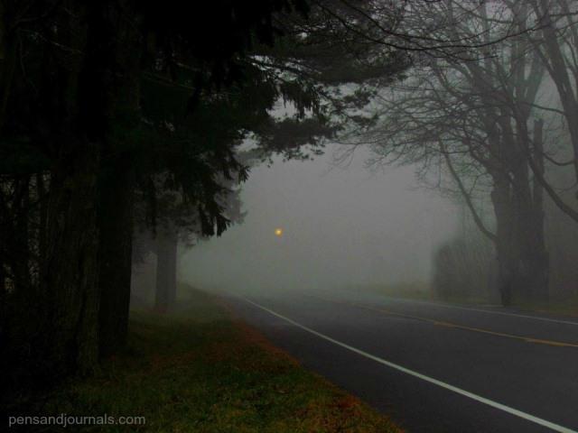 fog wp