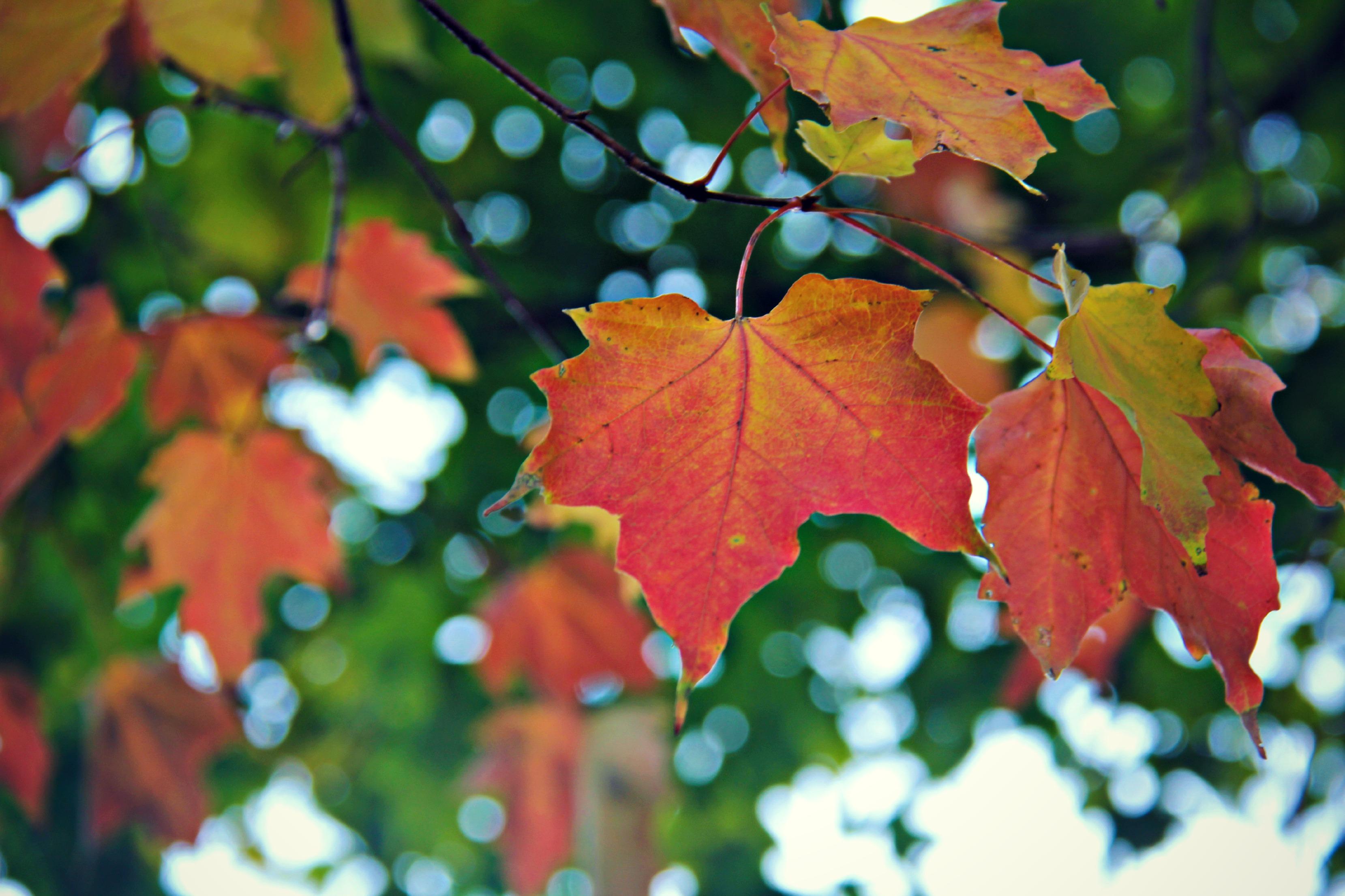 tree leave e